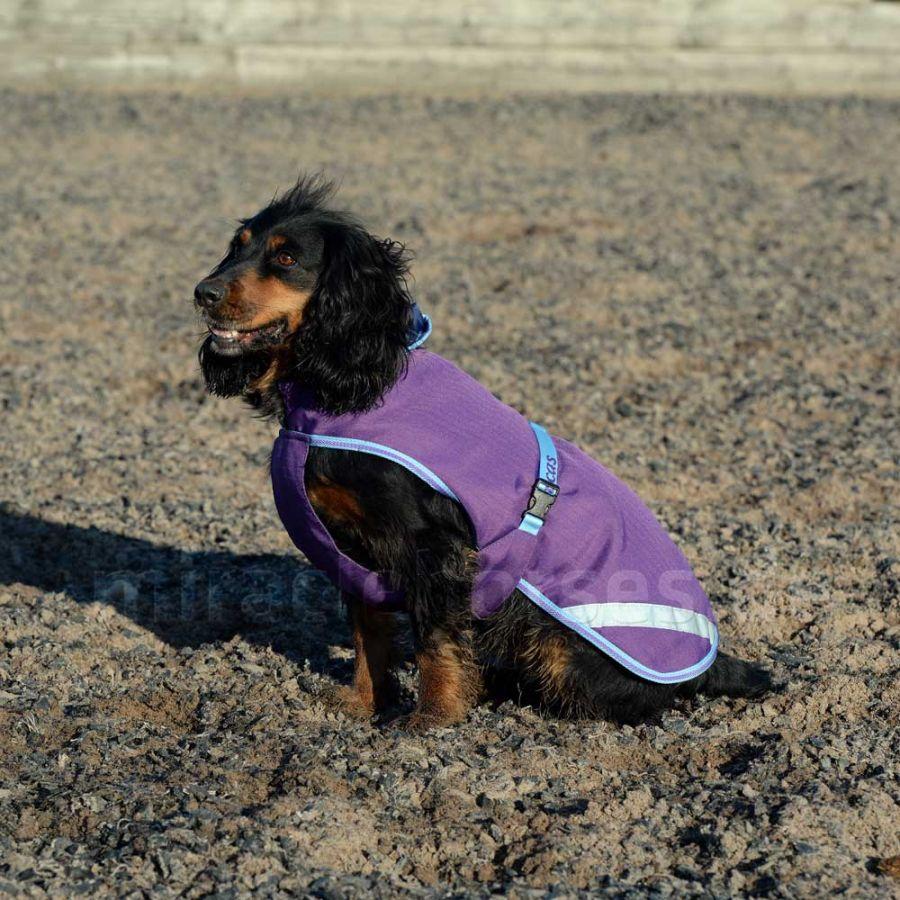 Bucas Freedom Dog Rug 50g Ginger//Navy Hundedecke